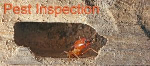 One of the most thorough pest inspection on the market