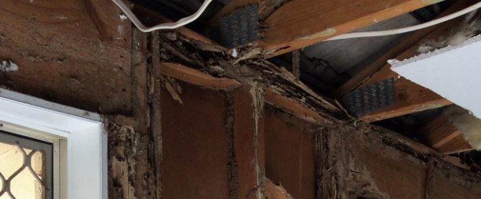 See The Damage Termites In A House Can Do