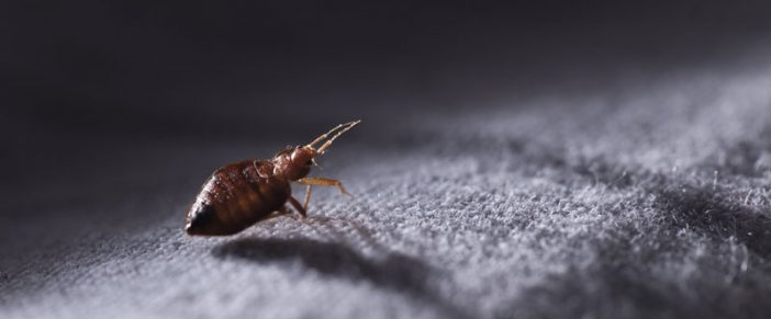 Bed Bug Bites – How to Treat them