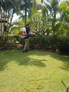 Pest Control Brisbane-Gold Coast-Ipswich
