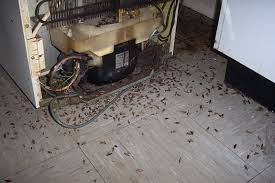 cockroach infestation