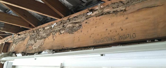 Termites In Australia