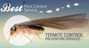 Pest control treatment during summer
