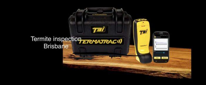 Termite Service Brisbane – Expert Local Inspectors