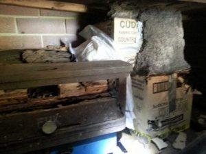 Termite Home Destructive