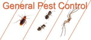 Annual general pest control treatment for bug free year.