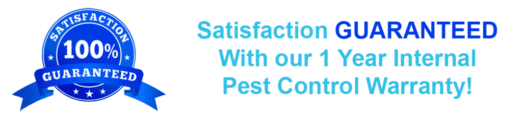 pest control treatment