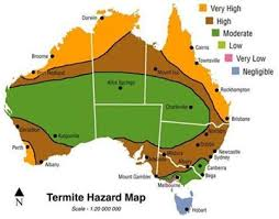 The Most Destructive Termites in SEQ