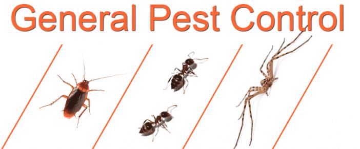 Pest Control Treatments With 1Yr Internal Warranty
