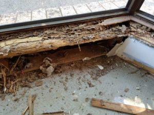 Most Destructive Termites