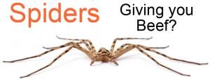 spider-control